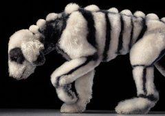 Dog Gods Tim Flach